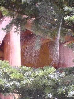 蜘蛛の巣だらけ