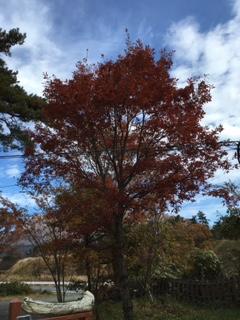 紅葉から落葉へ